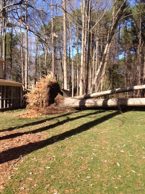 Tree Removal Wake Forest